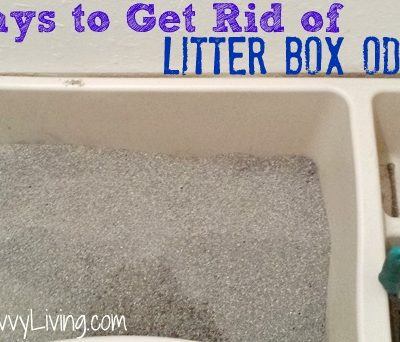 5 Ways to Get Rid of Litter Box Odors
