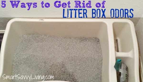 5+ Ways to Get Rid of Litter Box Odors 2
