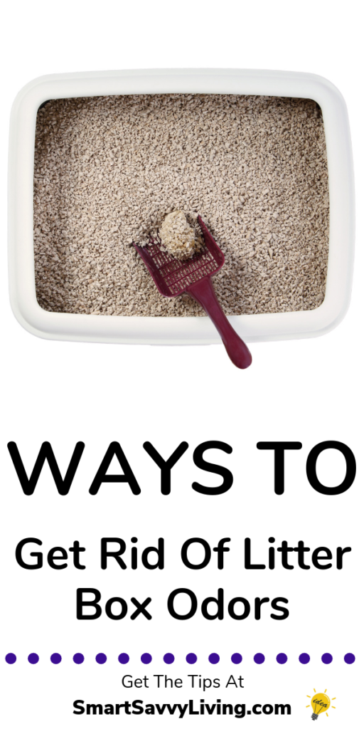 5+ Ways to Get Rid of Litter Box Odors