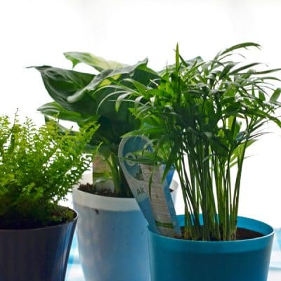 How I'm Making Our Air Cleaner During National Indoor Plant Week