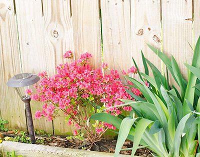 What Else Do You Grow When You Garden?