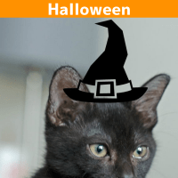 5 Ways to Keep Your Pets Safe During Halloween
