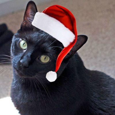 10 Common Holiday Items Poisonous to Cats and Dogs