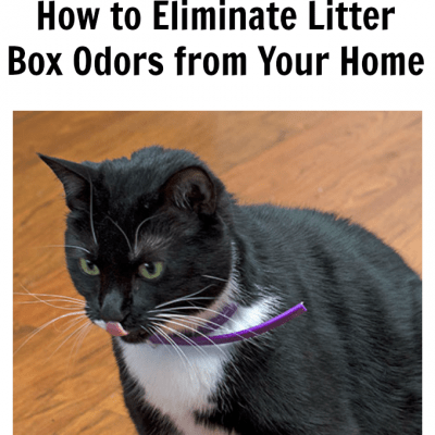 How to Eliminate Litter Box Odors from Your Home