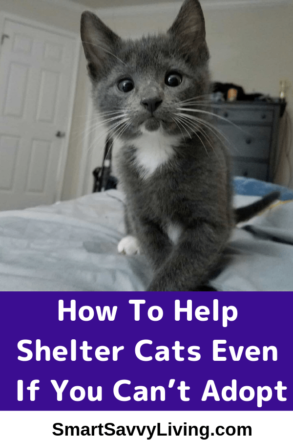 How To Help Shelter Cats Even If You Can't Adopt 6