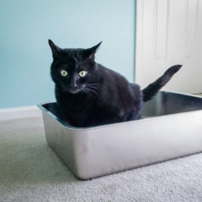 iPrimio Stainless Steel Litter Box and Litter Scoop Review